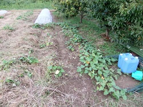 2012.9.23 ママさんの圃場 008 (6)