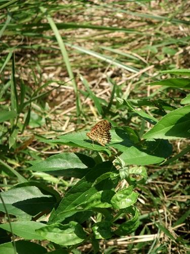2012.9.29 稲刈り時の野の花 035 (4)