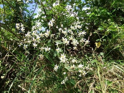 2012.9.29 稲刈り時の野の花 035 (7)