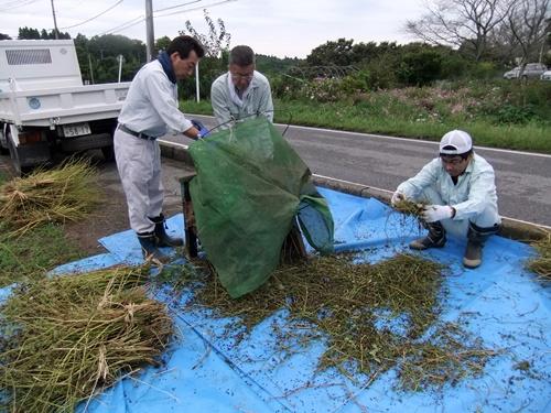 2012.10.7 秋のそば収穫 008 (5)