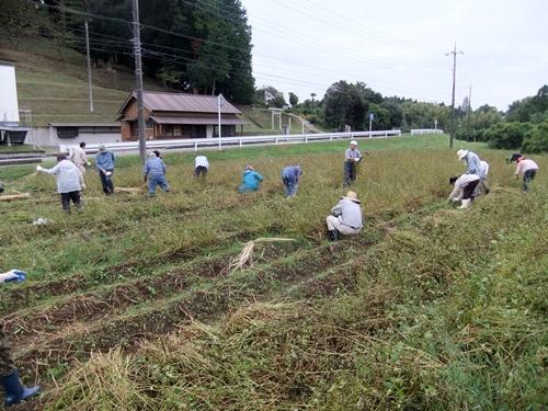 2012.10.7 秋のそば収穫 008