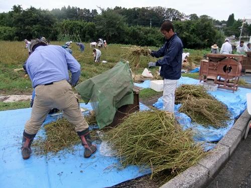 2012.10.7 秋のそば収穫 008 (1)