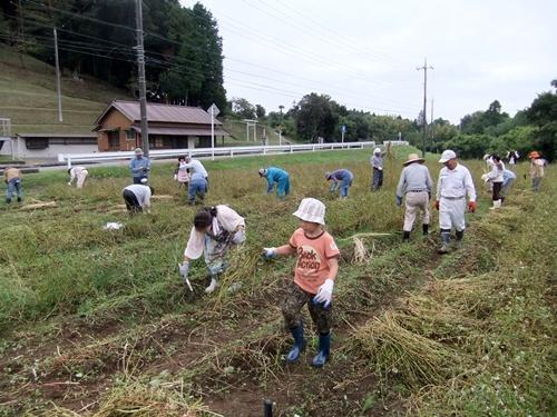 2012.10.7 秋のそば収穫 008 (7)