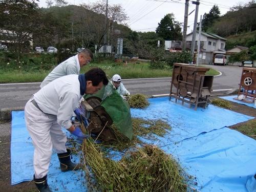 2012.10.7 秋のそば収穫 008 (6)