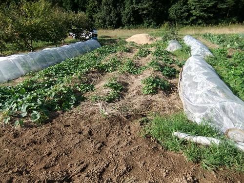 2012.10.10 秋の野菜畑 035 (8)