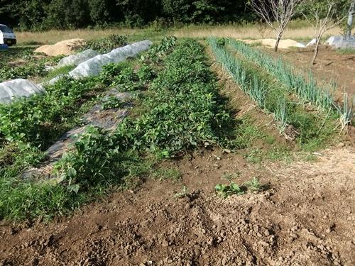 2012.10.10 秋の野菜畑 035 (7)