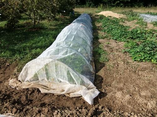 2012.10.10 秋の野菜畑 035 (9)