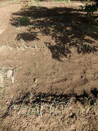 2012.10.10 秋の野菜畑 035 (11)