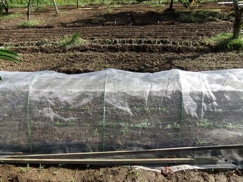2012.10.10 秋の野菜畑 035 (16)