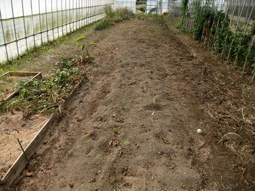 2012.10.24 秋の畑作 036 (19)
