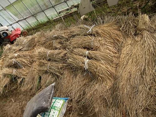 2012.10.24 秋の畑作 036 (20)