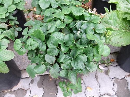 2012.11.7-8 韓国旅行 (野菜)001 (85)