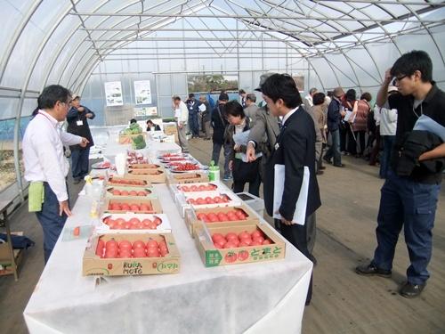 2012.11.13 みかど協和オープンディ 013 (4)