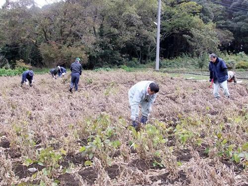 2012.11.17 ファーマーズ大豆の収穫 025 (2)