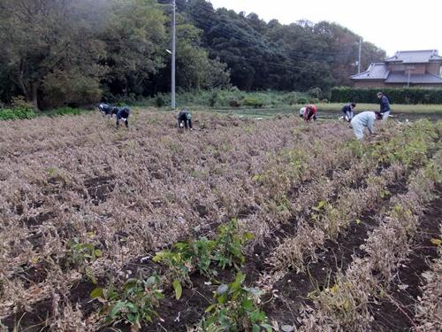 2012.11.17 ファーマーズ大豆の収穫 025 (1)