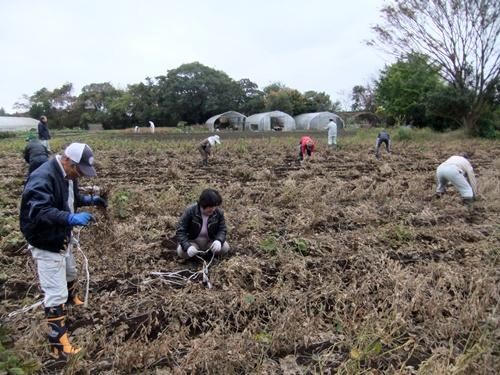 2012.11.17 ファーマーズ大豆の収穫 025