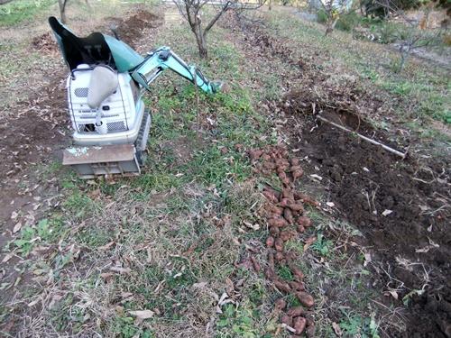 2012.12.7 さつまいもの収穫 005 (1)