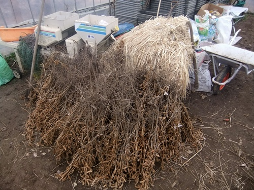 2012.12.30 年末風景(野菜) 027 (5)