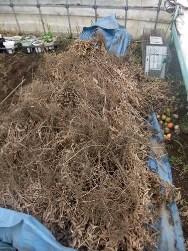 2012.12.30 年末風景(野菜) 027 (4)