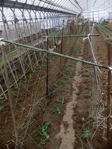 2012.12.30 年末風景(野菜) 027 (2)