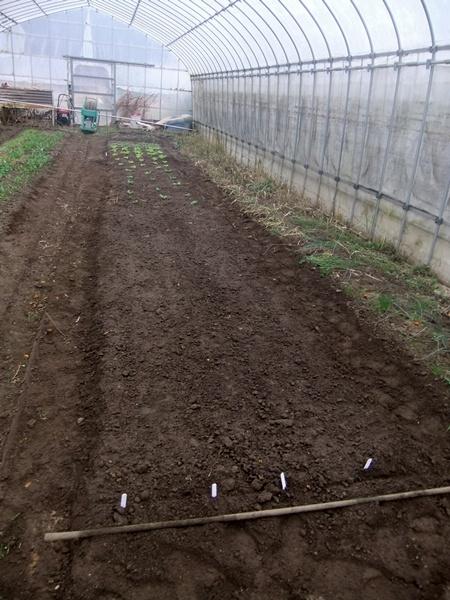 2012.12.30 年末風景(野菜) 027 (3)