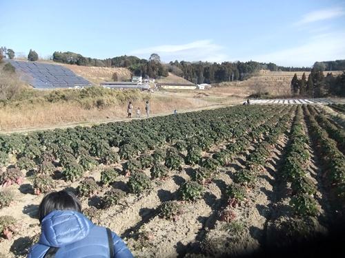 2013.1.12 耕す㈱新年会(野菜) 020 (5)