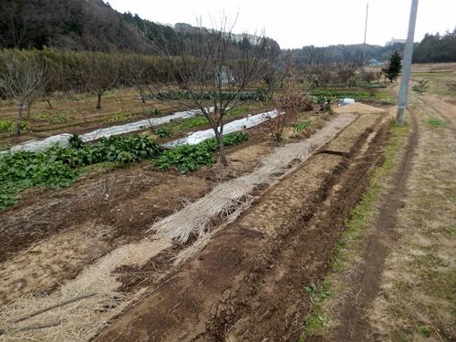 2014.1.1 耕作農地(伊藤農園) 056