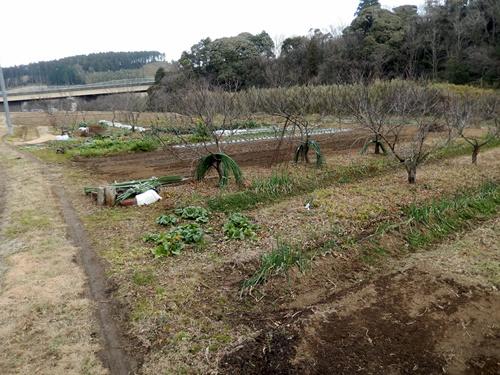 2014.1.1 耕作農地(伊藤農園) 052