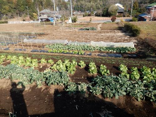 2014.1.1 耕作農地(伊藤農園) 073