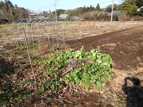 2014.1.1 耕作農地(伊藤農園) 071