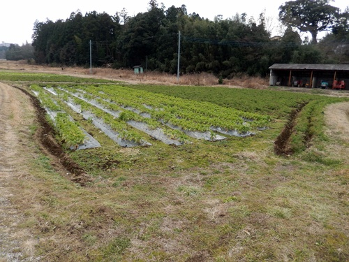 2014.1.1 耕作農地(伊藤農園) 061
