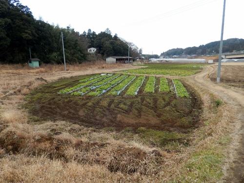 2014.1.1 耕作農地(伊藤農園) 058