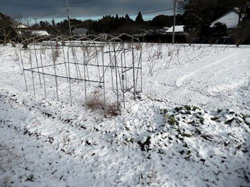 2014.2.4 初雪(寺畑) 002 (1)