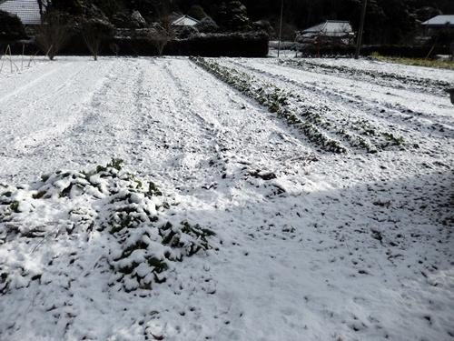 2014.2.4 初雪(寺畑) 002