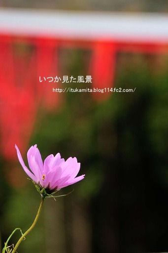D3C_1026ri-ss.jpg