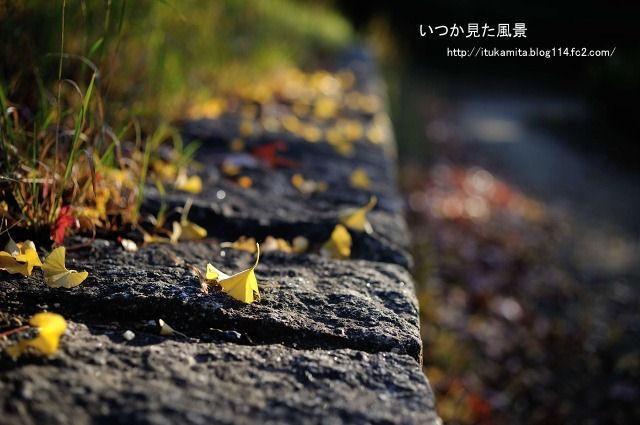 DS7_2223ri-s.jpg