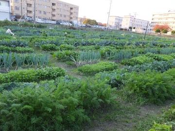ふくおか体験農園現地見学4