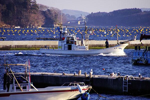 山田町大沢漁港に入港する漁船