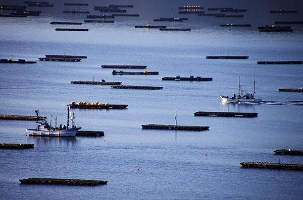 山田湾を往来する漁船