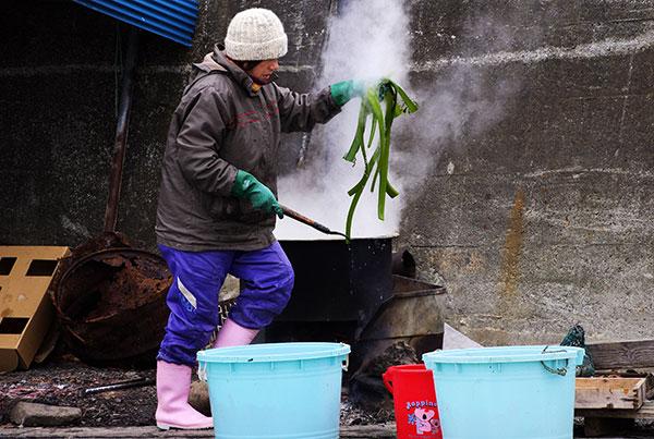 茎ワカメの湯通し作業