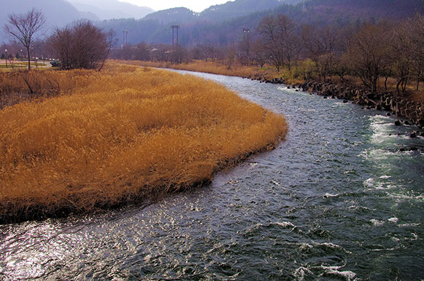 早春の小本川