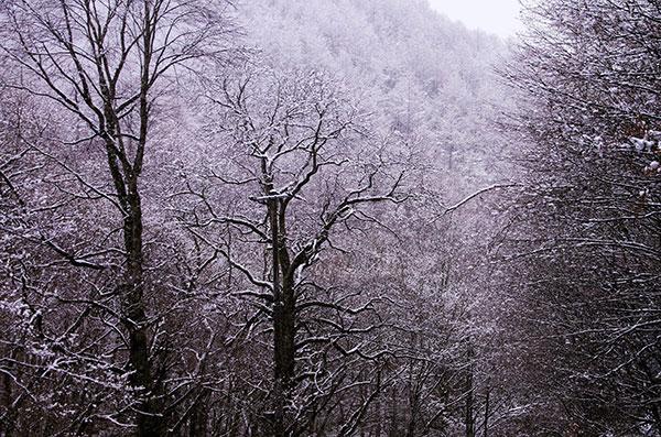遠野市恩徳の雪景