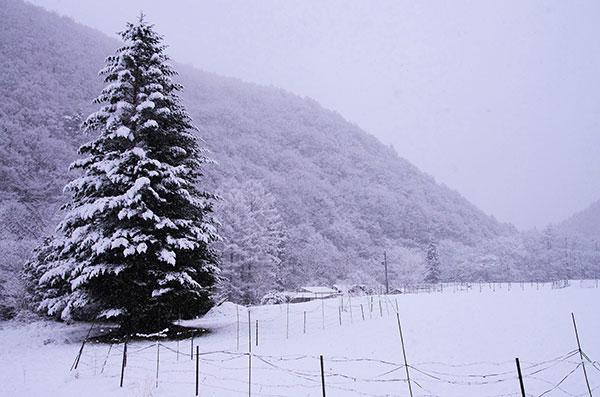 川井村新田の雪景