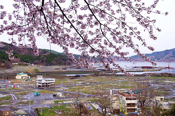 大槌町 城山の桜