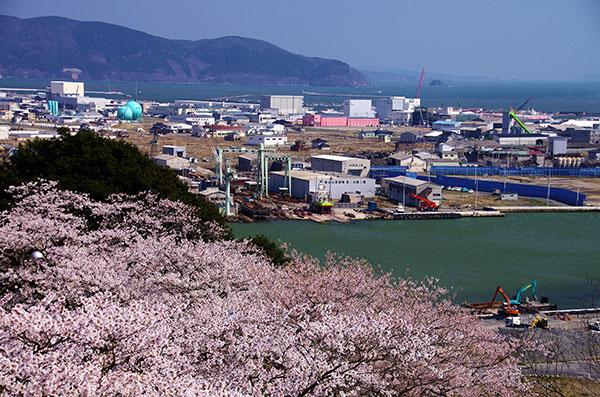 石巻 日和山公園の桜