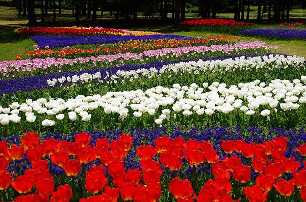 海の中道海浜公園の花畑