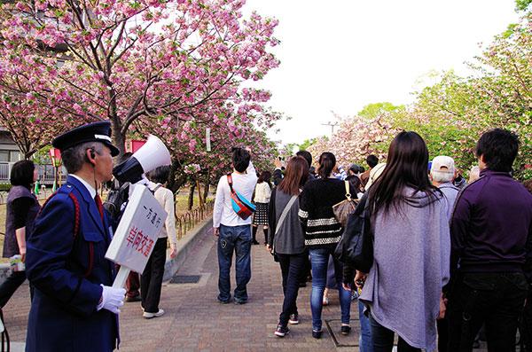 造幣局の桜の通り抜け(2)