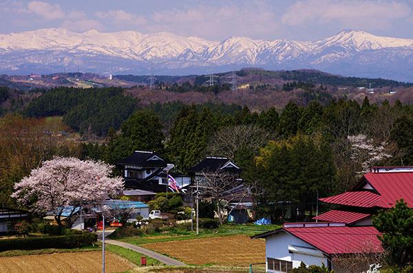 焼石連峰と桜