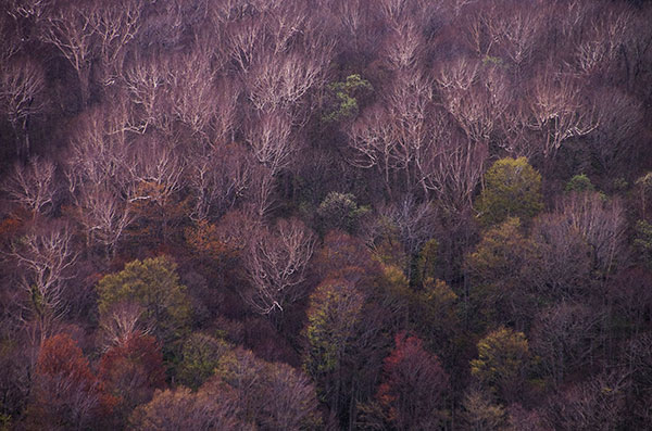 浅春の亀が森