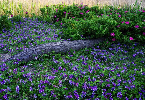 十府ケ浦海岸の花